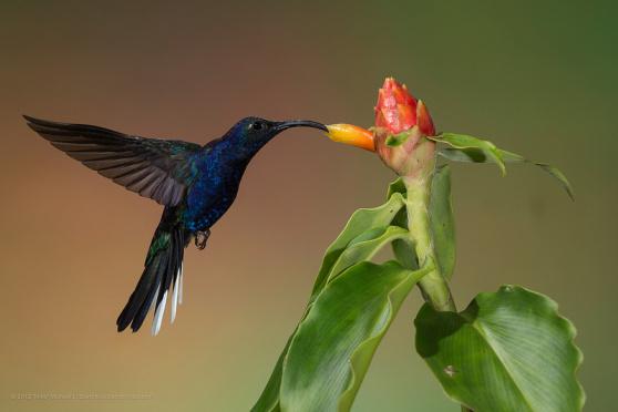 Hummingbird Seo Company